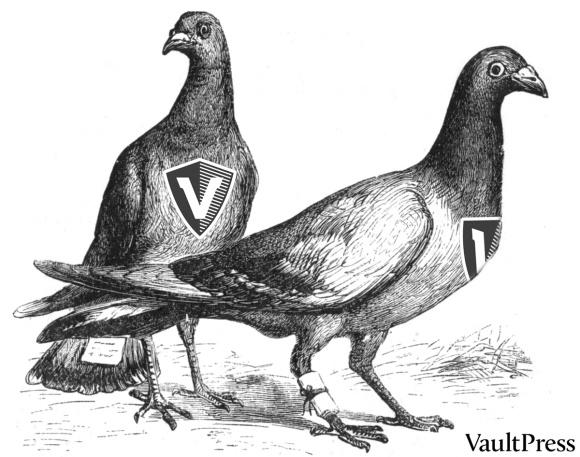 vaultpress-pigeons